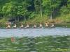 2012_ted_phoenix_regatta_0735
