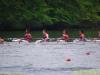 2012_ted_phoenix_regatta_1074